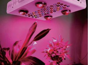 China Nouveaux Products Noah 8S 6S 4S 1200W 1000W 600W LED Plant Grow Lights for Indoor Greenhouse on sale
