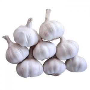 China Garlic Extract on sale