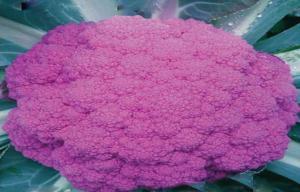 China Organic Purple Freezing Fresh Cauliflower Low Fat , 40 - 60 Mm on sale