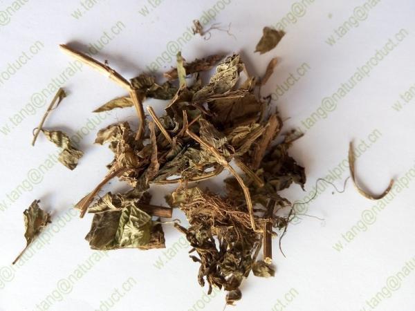 Lysimachia foenum-graecum Hance dried plants for spice