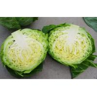 Contains Carotenes , Thiocyanates Round Chinese Napa Cabbage Low Calories