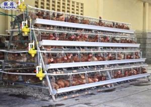 China 10000 Egg Layer Chicken Cage / Poultry Farm Layer Cage Customized Service on sale