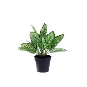 China Beautiful Plastice Artificial Indoor Plants Calathea Sanderiana 35CM High on sale