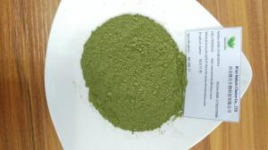 China 100% pure Moringa oleifera powder on sale