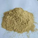 Focus Herb Natural Tongkat Ali Extract