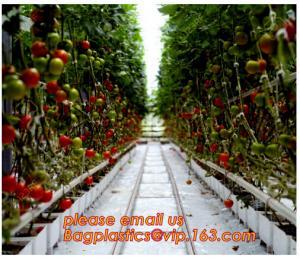 China Film Covering Tomato Planting Greenhouse,Tomato Greenhouse film, Plastic Polyethylene sheet 6 mil 4 year UV Resistant cr on sale