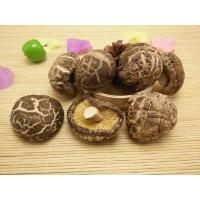 China Factory Price Premium NEW CROP China Tea Flower Dried Mushroom Shiitake Whole in Bulk on sale