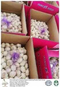 China China fresh garlic export to Angola with 4.5-5.0cm 10kg loose packing carton. on sale