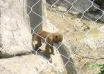 Hand Woven Zoo Wire Mesh Pongidae Enclosure 60 / 90 Degree Mesh Angle