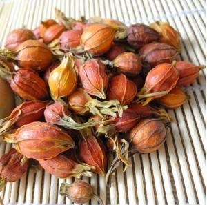 China Dried wild Fructus Gardeniae Cape Jasmine Fruit Gardenia jasminoides Ellis raw herb Zhi zi on sale