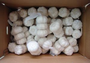 China fresh pure white garlic for garlic importer on sale
