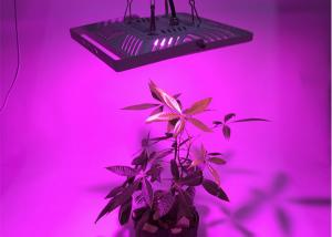 China Full spectrum IP66 Waterproof cob cree 300w growing light panel for marijuana cannabis medical plants on sale