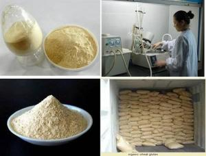 China Food Grade Wheat Gluten on sale
