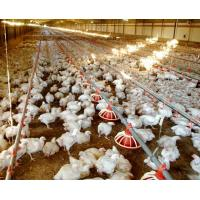 WorldPoultry - Night time cooling pad operation during extremely hot