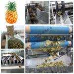 Pineapple processing plant, pineapple processing line machine
