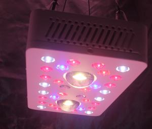 China LED Grow Lighs 205W(UV/IR) full-cycle growing from seedling to flower on sale
