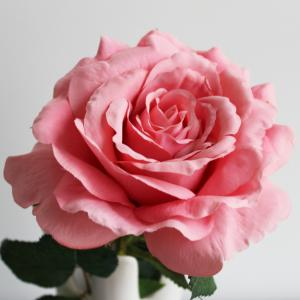 China Customized Size Artificial Flower Stems For Rose Flower OEM / ODM Accepted on sale