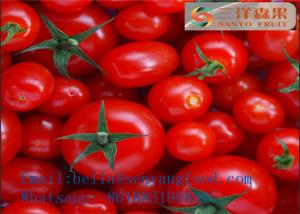 China Canned Tomato Paste Tomato Ketchup Sachet Tomato paste Canned Puree on sale