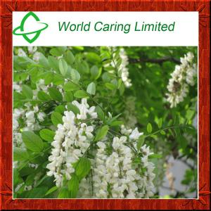 China High Purity Herbal Ingredient Natural Sophora Japonica Extract 95% Troxerutin HPLC on sale