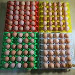 High quality 30 chicken egg trays/egg packing tray