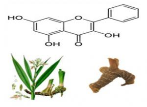 China Lesser galangal Extract Galangin 98% HPLC,CAS No.:548-83-4,Alpinia officinarum Extract,pharmaceutical,food,cosmetic use on sale