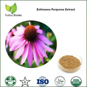 China echinacea extract,echinacea purpurea extract,echinacea herb extract,cichoric acid on sale