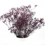 Soft Color Preserved Dried Baby's Breath Beautiful For New Year Valentine Gift