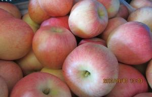 China Large Red Organic Fuji Apple Fresh Contains Zinc , Red Delicious Apple large fruit, smooth fruit surface on sale