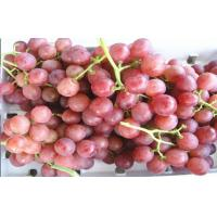 Juicy Green / Red Globe Grapes Seeded With Sweet Flesh , 18 - 28mm, Easy peeling, Firm and crisp flesh