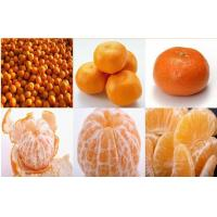 Sweet Baby Fresh Mandarin Oranges