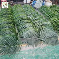 UVG indoor cheap plastic palm tree leaves green fake leaves wholesale for party decoration PTR062