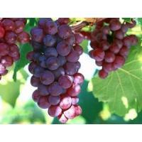Cosmetics ingredient Procyanidolic≥95.0%;OPC≥95.0%, Polyphenol 75% Grape seed Extract