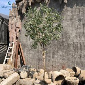 China Moisture Resistant Natural Plants Olive Tree Bonsai For River Side And Park on sale