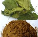 Natural Mulberry Extract  1-Deoxynojirimycin (DNJ)5% powder