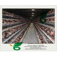 Chicken cages and battery cages for layers and broilers