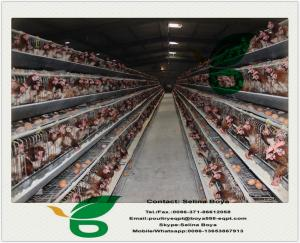 China Chicken cages and battery cages for layers and broilers on sale