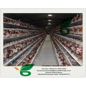 China Клетки цыпленка и клетки батареи для слоев и бройлеров on sale