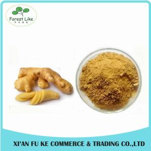 China 100% Natural Yellow Ginger Extract Powder 10 :1 on sale
