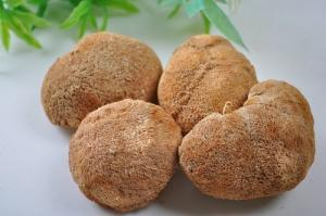 China natural Lion's Mane Mushroom Extract Powder 30%Polysaccharides on sale