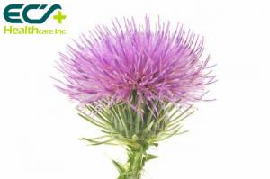 China Pharmaceutical Organic Milk Thistle Powder Silybum Marianum L Gaertn Protecting Liver on sale