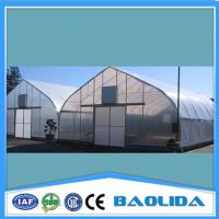 China Polyethylene Film Multispan Greenhouse Galvanized Steel Structure Greenhouse on sale