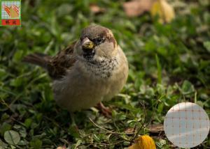 Quality Anti Bird Garden Mesh Netting For Plants , BOP Bird Prevention Netting for sale
