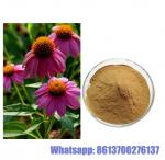 echinacea purpurea extract polyphenol echinacea purpurea p.e.