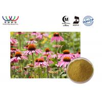 China Medicinal Echinacea Root Extract , Super Echinacea Extract  Blance Blood Sugar And Fat on sale
