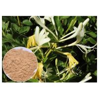 China Anti-bacterial Chlorogenic acid 5% Honeysuckle Flower Extract powder on sale