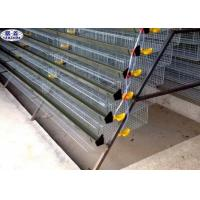 Automatic Quail Egg Laying Cages Battery Operated Design Customized Size