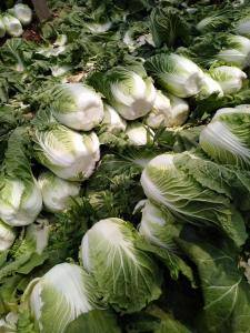 China Milky Juice Organic Chinese Cabbage With Clean And Smooth Surface on sale