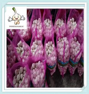 China Fresh Purple Garlic Low Price 10Kg Mesh Bag Purple Fresh Garlic on sale