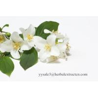 China Jasmine Extract, Jasmine Flower Extract, 4:1,10:1 TLC, Qualified manufacturer, Shaanxi Yongyuan, high quality on sale