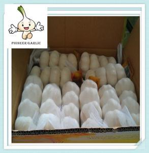 China factory outlets originality fresh garlic supplier export china garlic on sale